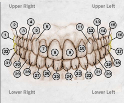 Dental Information Determining A Tooth Number Or Area